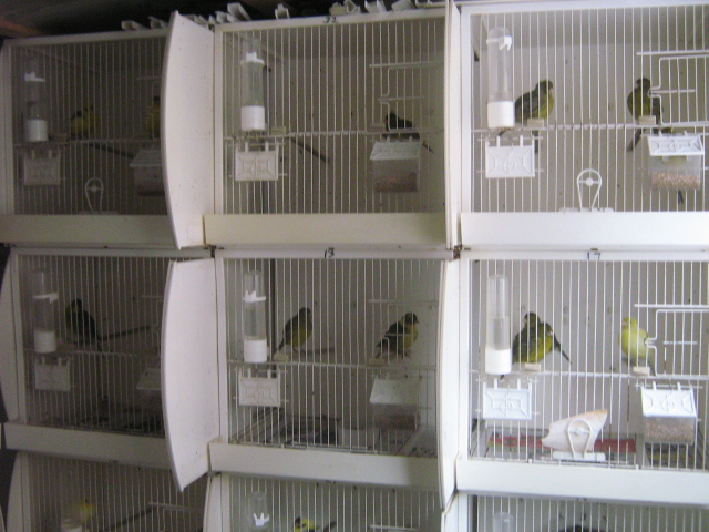 Plastic Breeding Cages Mel Rowe S Fife Canary Site